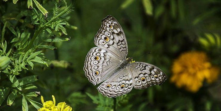 cropped-butterfly1.jpg