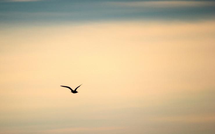 bird-189347_1920
